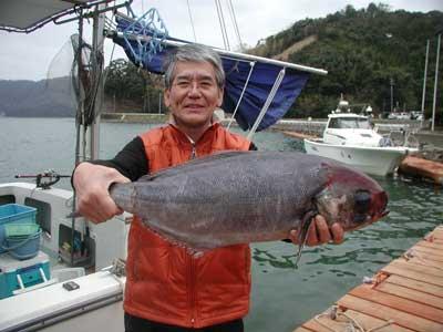 2011年4月2日(土)若狭湾でメダイの68cmを釣られました