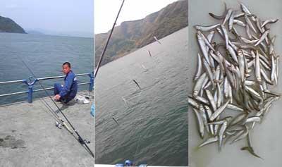 マリーナスタッフが釣に行ってきました