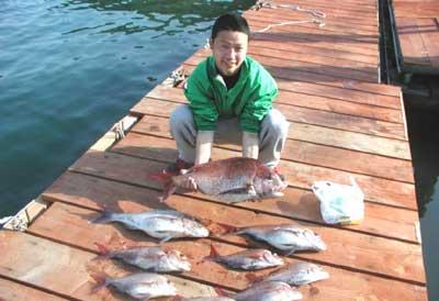 2011年5月8日(日)若狭湾で鯛の66cmを釣られました