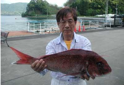 2011年5月21日(土)若狭湾で鯛の60cmを釣られました