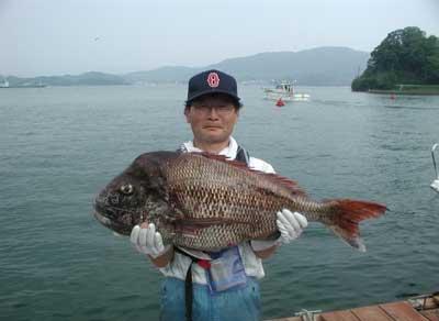 2011年6月4日(土)若狭湾で鯛の83.5cmを釣られました