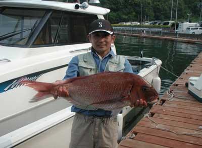 2011年6月4日(土)若狭湾で鯛の74cmを釣られました