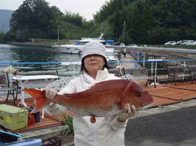 2011年10月9日(日)若狭湾で鯛の77.0cmを釣られました