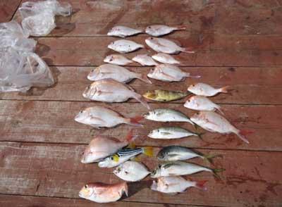 2011年10月10日(月)若狭湾で鯛や鯵を釣られました