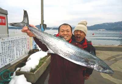 2012年2月21日(火)若狭湾でサワラの90cmを釣られました
