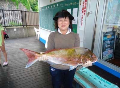 2012年5月27日(日)若狭湾で鯛や鯵を釣られました