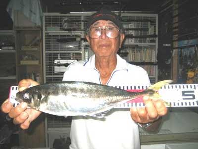 2012年8月11日(土)若狭湾でアジの45.0cmを釣られました
