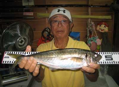 2012年9月2日(日)若狭湾でアジの45.0cmを釣られました