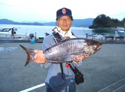 2012年10月27日(土)若狭湾でメダイの70.0cmを釣られました