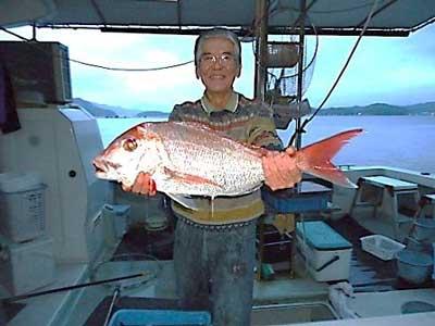 2012年12月15日(土)若狭湾で鯛の66.0cmを釣られました