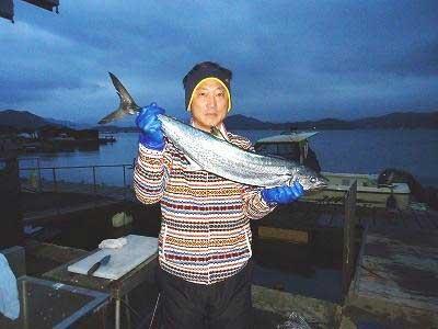 2012年12月15日(土)若狭湾でサワラの85.0cmを釣られました