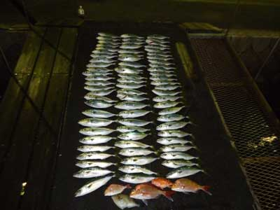 2013年1月31日(木)若狭湾でハマチやタイやサバを釣られました