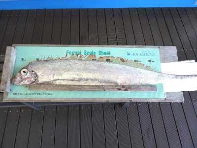2013年3月9日(土)若狭湾でリュウグウノツカイを釣られました