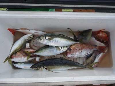 2013年3月31日(日)若狭湾で鯵を釣られました
