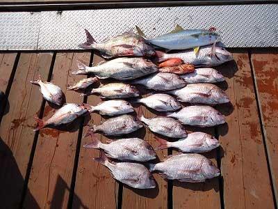 2013年4月12日(金)若狭湾で鯛やヒラマサを釣られました