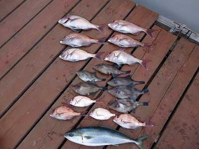 2013年4月17日(水)若狭湾で鯛の60cmを釣られました