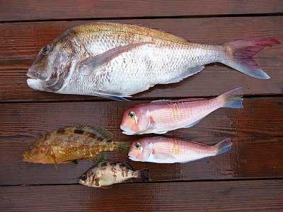 2013年4月20日(土)若狭湾でメ鯛やアマダイを釣られました