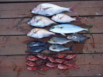 2013年4月22日(月)若狭湾で鯛やイサキを釣られました