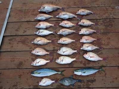 2013年4月23日(火)若狭湾で鯛の56cmを釣られました
