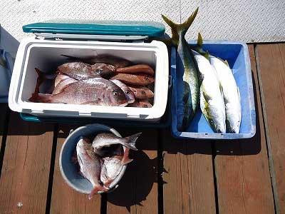 2013年4月28日(日)若狭湾で鯛やヒラマサを釣られました
