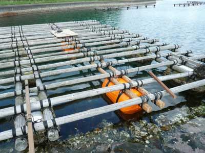 2011年5月8日(日)筏の中央に丸太を追加してフロートを3個増やす事にしました
