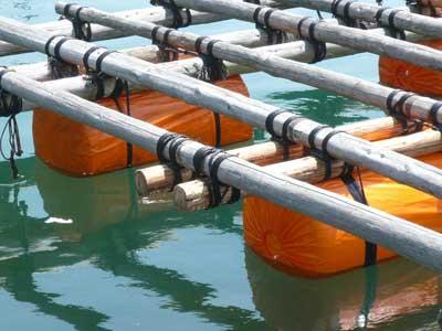 2011年5月8日(日)追加3個のフロートも配置され筏が海面から高くなりました