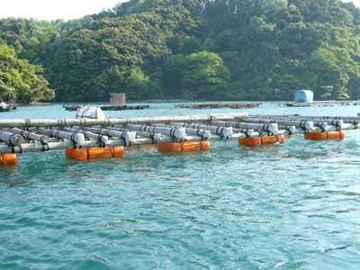 2011年5月8日(日)筏は基の位置に配置し係留ロープでしっかりと縛りました