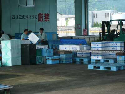 漁協から出荷される岩牡蠣の梱包作業中でした