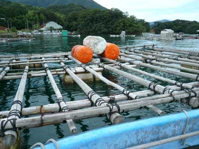 2011年9月23日(金)フロートの浮力は1個で270kgとなります