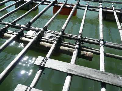 2011年9月23日(金)ロープで数ケ所を縛ると筏の中央部分は頑丈になりました