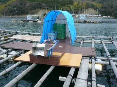 牡蠣を引き揚げる体制は整っております